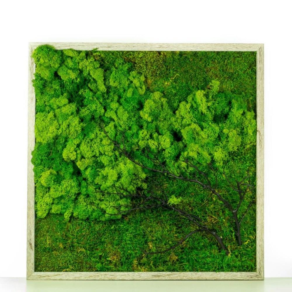 Cuadro de musgo preservado for Jardin vertical liofilizado